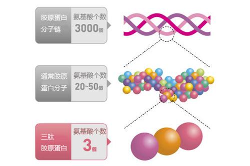 胶原蛋白分子结构